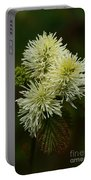 Fothergilla Major - Mountain Witchalder Portable Battery Charger