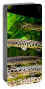 Four Aquarium Fishes In Zoo Portable Battery Charger