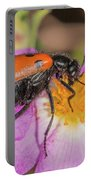 Four-spotted Blister Beetle - Mylabris Quadripunctata Portable Battery Charger