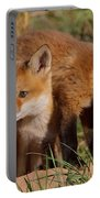 Fox Cubs Playing Portable Battery Charger by William Jobes