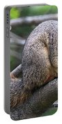 Fox Squirrel On A Branch - Southern Indiana Portable Battery Charger