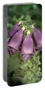 Foxglove Portable Battery Charger