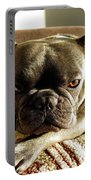 French Bulldog Fierce Look Portable Battery Charger
