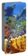 French Reef 1 Portable Battery Charger