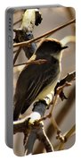 Frenchbroad Flycatcher Portable Battery Charger