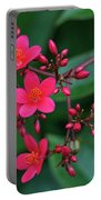 Jatrohpa Bush Blooms Portable Battery Charger