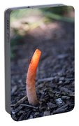 Fungi And Insect Portable Battery Charger