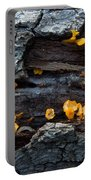 Fungi On Log Portable Battery Charger