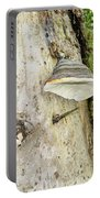 Fungus Grows On A Tree Trunk Portable Battery Charger