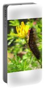 Furry Caterpillar On A Yellow Flower Portable Battery Charger
