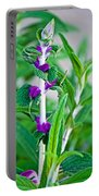 Salvia At Pilgrim Place In Claremont-california  Portable Battery Charger