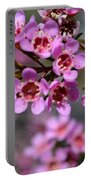 Geraldton Wax Flowers, Cwa Pink - Australian Native Flower Portable Battery Charger