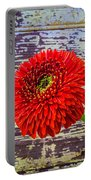 Gerbera Daisy Against Old Wall Portable Battery Charger