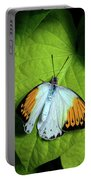 Giant Orange Tip Butterfly Portable Battery Charger