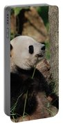 Giant Panda Bear Sitting Up Leaning Against A Tree Portable Battery Charger