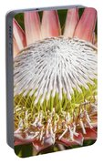 Giant Pink King Protea Flower Portable Battery Charger