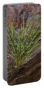 Glowing Ocotillo Portable Battery Charger