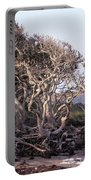 Gnarled Oak Trees Portable Battery Charger