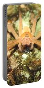 Gold Hunting Spider Portable Battery Charger