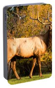 Golden Bull Elk Portrait Portable Battery Charger