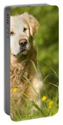 golden Retriever in garden Portable Battery Charger