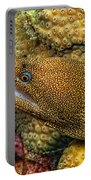 Goldentail Moray Portable Battery Charger