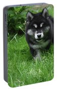 Gorgeous Alusky Puppy Dog Creeping Through Grass Portable Battery Charger