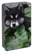 Gorgeous Alusky Puppy Playing Hide And Seek  Portable Battery Charger