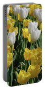 Gorgeous Blooming Field Of White And Yellow Tulips Portable Battery Charger
