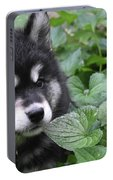 Gorgeous Fluffy Alusky Puppy Peaking Out Of Plants Portable Battery Charger