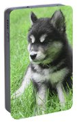 Gorgeous Fluffy Black And White Husky Puppy In Grass Portable Battery Charger