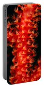 Gorgonian Coral Portable Battery Charger
