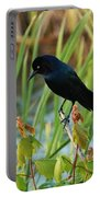 Grackle Hiding In Marsh Portable Battery Charger