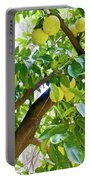 Grapefruit Tree At Pilgrim Place In Claremont-california   Portable Battery Charger