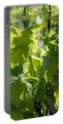 Grapevine In Early Spring Portable Battery Charger