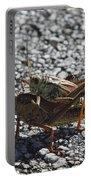Grasshoper Love Portable Battery Charger
