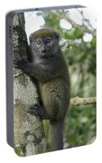 Gray Bamboo Lemur Portable Battery Charger