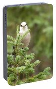 Gray Jay Portable Battery Charger