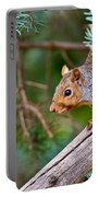 Gray Squirrel Pictures 93 Portable Battery Charger