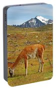 Grazing Guanaco In Patagonia Portable Battery Charger