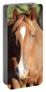 Grazing Mare  Portable Battery Charger