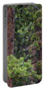 Great Gray Owl Perched Portable Battery Charger
