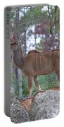 Greater Kudu Female - Rdw002756 Portable Battery Charger