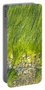 Green Algae On Rock Portable Battery Charger