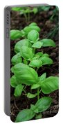 Green Arugula Growing In The Garden Portable Battery Charger