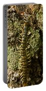 Green Centipede Portable Battery Charger
