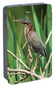 Green Heron At The Governor's Palace Gardens Portable Battery Charger