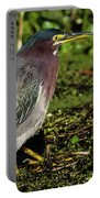 Green Heron In Swampy Water Portable Battery Charger