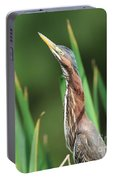 Green Heron Watches Portable Battery Charger
