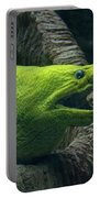 Green Moray Eel Portable Battery Charger